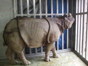 【SX-203】動物園でもシルバーウインチが大活躍!